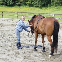a woman training a horse in a sandy paddock